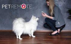 Pet Remote #pet #gadget