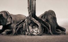 Ashes and Snow by Gregory Colbert #inspiration #photography #animal