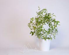 studio kg: parramyd planter #furniture #design #plant #green