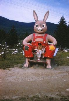 Other / #rabbit