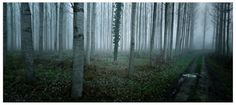 aaron hobson || c i n e m a s c a p e s #france #woods #photography