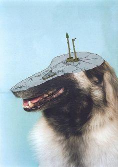 Tumblr #dog
