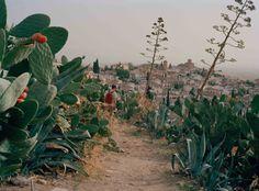cactus~
