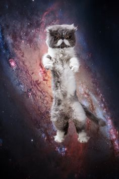 Katzen im Weltall