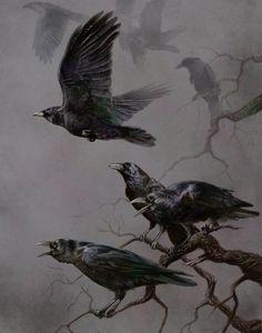 027_large.jpg (704×896) #birds #illustrations #crows
