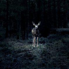 Reportage 2 | Lea Meienberg | Fotografie #wildlife #photography #meienberg #lea