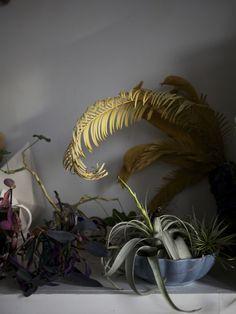 #plant #interior #vegetation