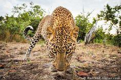 Wildlife Animals by Will Burrard-Lucas