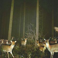 Booooooom Tumblr #deer #wilderness #wildlife #travel #landscape #photography #forest