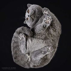 Andrius Burba Captures Cats From Underneath