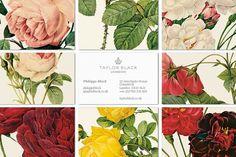 Taylor Negro - interabang #flower #cards