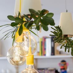 Yellow bulbs ins a graphic design studio with plants #yellow #bulb #lamp #plants