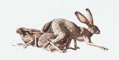 Negative Space is a Positive Thing :: Paintings by George Boorujy - NTHN blog #illustration #painting #animals #rabbit #sears #shop #hares