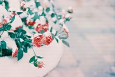 Shooting Film: The Flowers in the Snow #snow #roses #plant #photography #frost #art #leaves #garden #ice #flowers #winter