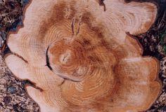 tumblr_lds4qbGVCr1qe9oe2o1_500.jpg (Immagine JPEG, 500x340 pixel) #tree