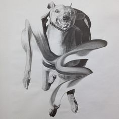 photo #greyhound #pencil