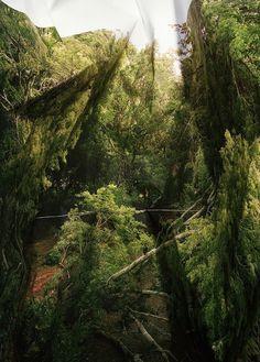 CJWHO ™ (Distorted Landscape Photographs by Laura...) #photography #design #art #landscape