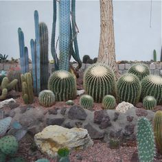 promieniowanie:http://www.flickr.com/photos/anmulder #cactus