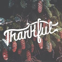 thankful #typography #hand lettering #pine cone #thankful