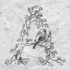 Holt wip on Behance #bird #illustration #nature #drawn #hand