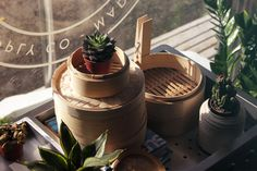 plant life, succelents