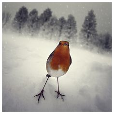 A hard winter... on the Behance Network #photography #bird #winter