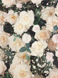 White roses #white #pattern #flowers #roses