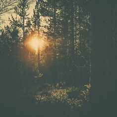 GO 70° NORTH #sun #warm #photography #nature #vintage #dreamy #trees