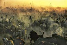 Sudan, photo, nature