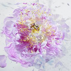 Liquid Nitrogen exploding flower by Martin Klimas