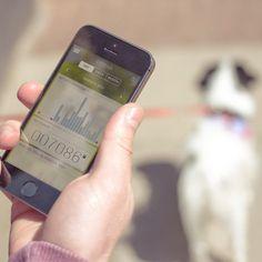 Tractive Motion Pet Activity Tracker #tech #flow #gadget #gift #ideas #cool