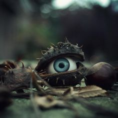 the trees have eyes | Flickr - Photo Sharing! #seed #eye #photography #tree