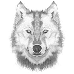 48_adriadeyzaguirremirrorhuskey.jpg (Imatge JPEG, 500x500 píxels) #black and white #pencil #symmetric #mirror animals #de yzaguirre