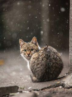 Stunning Animal Portraits by Sergey Polyushko