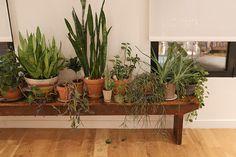 cait02 #interior #green #plant #pot