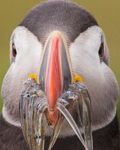 Sunil Gopalan Captures Striking Photos of Birds on Five Continents