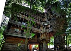All That Is Interesting - The World's Tallest Treehouse #architecture #treehouse #amazing