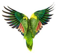 Adapt #zuckerman #parrot #anderw #bird