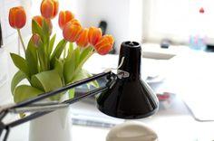 gabrieldesigns » + VOIX: PerretSchaad #interior #perretschaad #flowers
