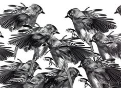 Christina Empedocles #white #empedocles #black #birds #illustration #and #christina