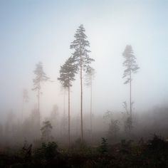 Norwegian wood #3 | Flickr - Photo Sharing!