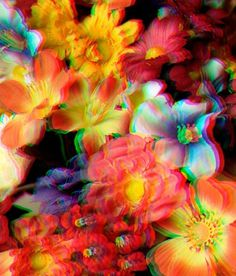 I like this blog #flower #color #saturation