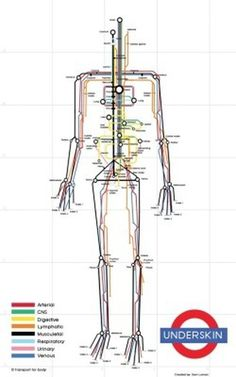 The Human Body As A Subway Map #infographic #data #subway map #human body