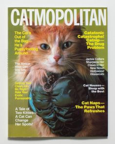 large_ 2 #cosmopolitan #catmopolitan #photography #cats #fashion