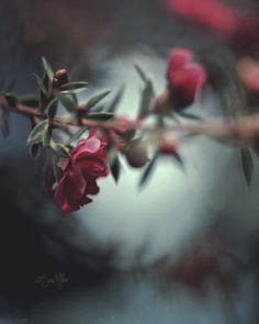 Fine Art Flowers Photography by Sara Möller