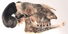 Skulls by DZO Olivier | LLGD.net #illustration #animal #skull #ink