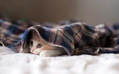 Kitten Under a Blanket #animal #photography #inspiration