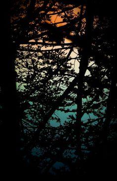 Tumblr #nature