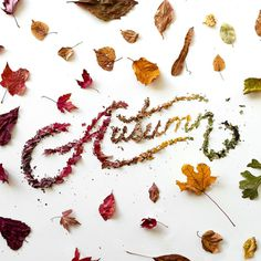 autumn, fall, leaves, lettering
