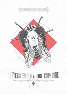 Díptero Brachicera Caprinae : As Ilustrações de Daniel Griza #illustration #skull #draw #insect